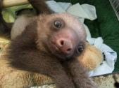 sloth-10