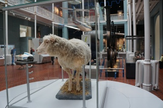 Dolly the cloned sheep! Yes, the ACTUAL Dolly!